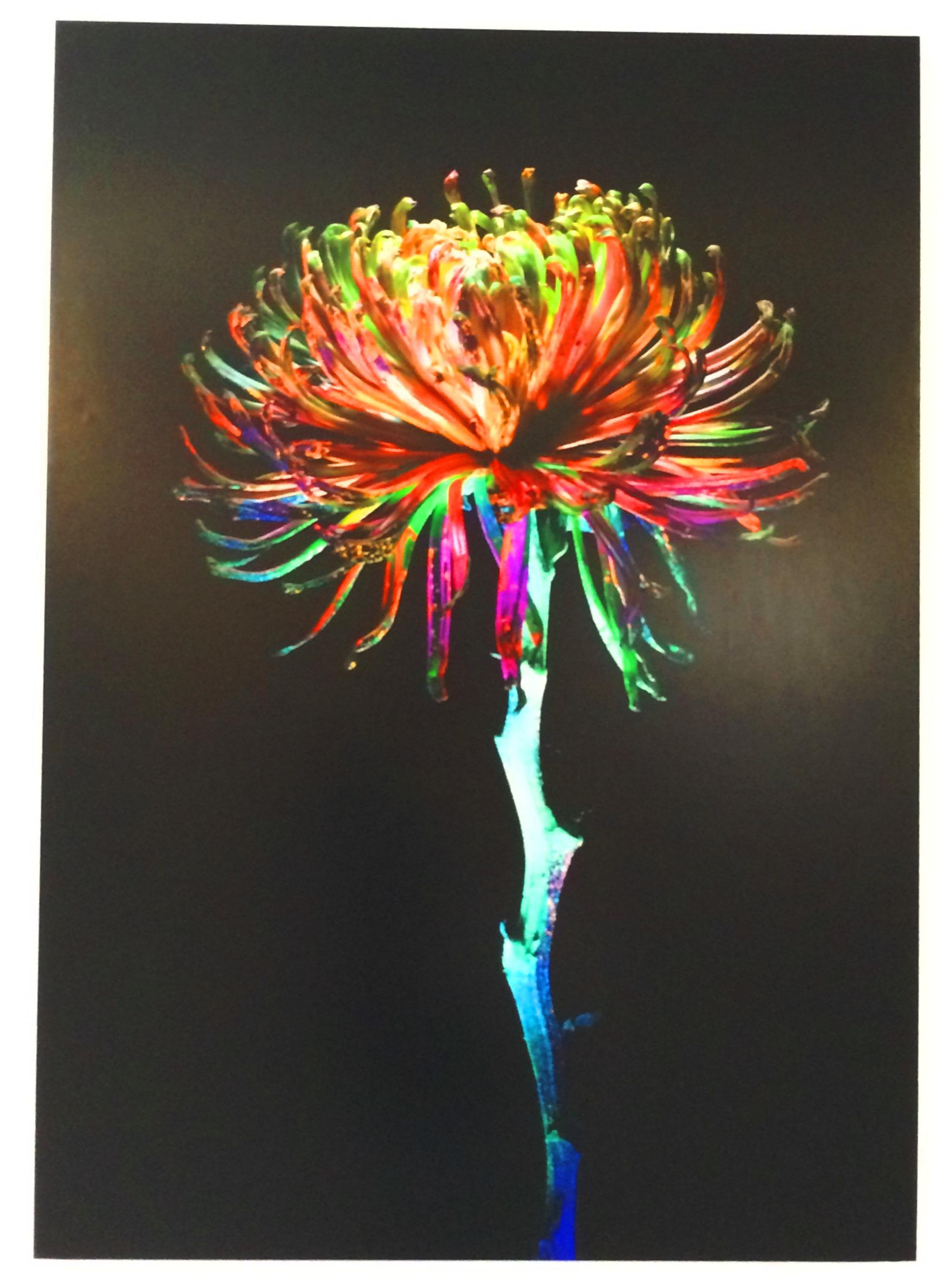 Herbal Florescence